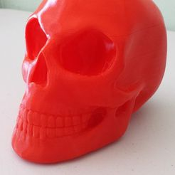 skull_display_large.jpg Download free STL file Skull • 3D printable model, Dourgurd