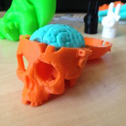 SkullBox_3DK_4.jpg Download free STL file Boneheads: Skull Box w/ Brain - via 3DKitbash.com • Model to 3D print, Quincy_of_3DKitbash