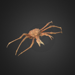Capture d'écran 2017-12-14 à 15.50.46.png Download free OBJ file King Crab • 3D printer model, AucklandMuseum