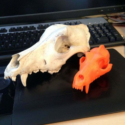 Boneheads_Wolf_Skull_2.JPG Download free STL file Boneheads Series 1: Wolf Skull w/ Articulated Jaw - via 3DKitbash.com • Model to 3D print, Quincy_of_3DKitbash
