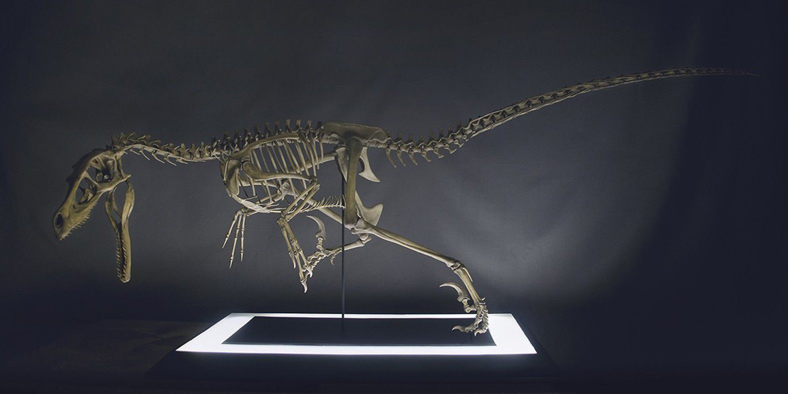 Find here a selection of the best 3D models of 3D printables dinosaurs