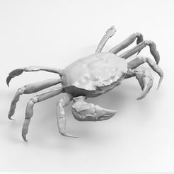 a.jpg Download OBJ file Shanghai hairy crab • 3D printer object, surperwan