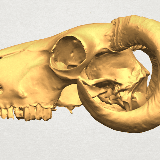 TDA0580 Skull of Goat 02 A02.png Download free STL file Skull of Goat 02 • 3D print design, GeorgesNikkei